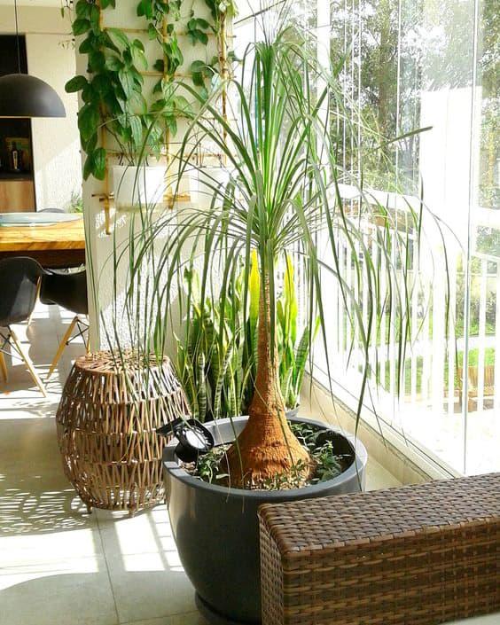 10 plantas fáceis de cuidar para apartamento 2