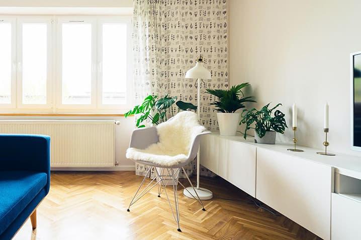 10 plantas fáceis de cuidar para apartamento